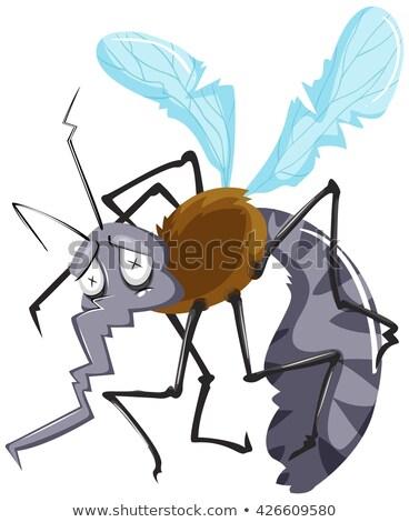 Szúnyog rossz forma illusztráció művészet fehér Stock fotó © bluering