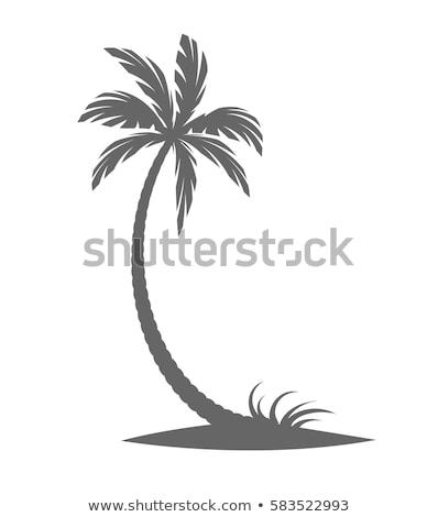 Deserto palmeiras ensolarado dourado areia quente Foto stock © adrian_n