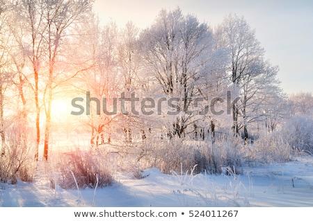 Sundown in winter snowy forest, beautiful landscape Stock photo © Taiga