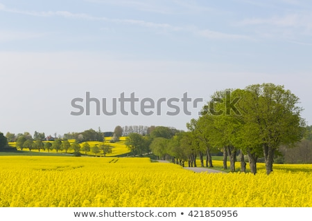 Charakter południe Szwecja podróży kamień Zdjęcia stock © jeancliclac
