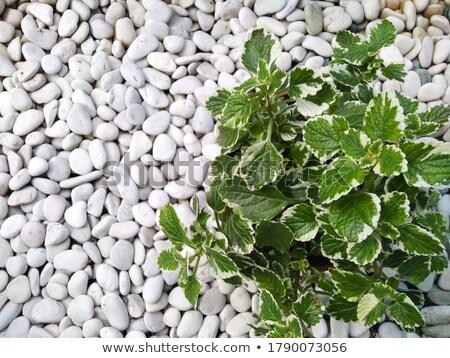 River pebbles Stock photo © bestmoose