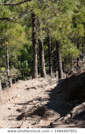 trail to roque nublo stock photo © benkrut