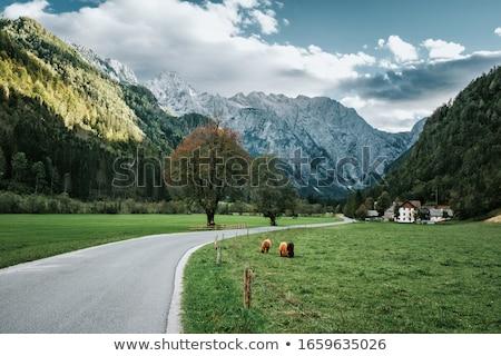 Slovenië alpen berg mooie Stockfoto © stevanovicigor