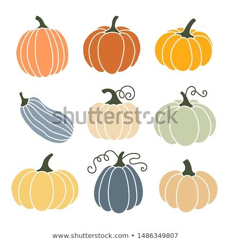 Vektör kabak beyaz arka plan turuncu yeme Stok fotoğraf © olgaaltunina