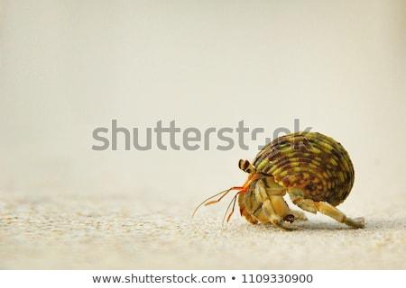 Caranguejo concha praia ilustração água peixe Foto stock © adrenalina