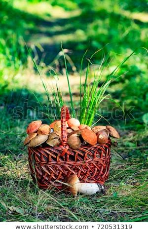 coup · toxique · champignons · herbe · bois - photo stock © nobilior