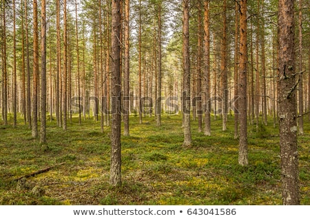 Natural spring in Nordic forest Stock photo © Mps197