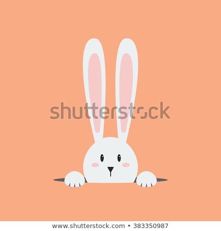Cartoon кролик сокрытие иллюстрация за знак Сток-фото © cthoman