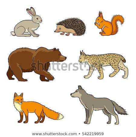 Cartoon Bobcat Walking Stock photo © cthoman