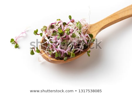 Fresh pink radish sprouts on a wooden spoon Stock photo © madeleine_steinbach