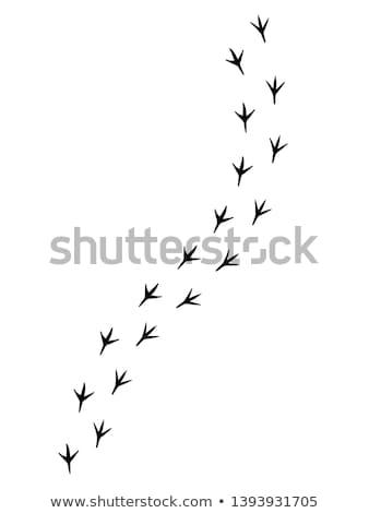 куриные Лапы шаги простой черный силуэта Сток-фото © evgeny89