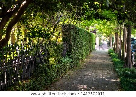 Zonnige steegje stad park voorjaar natuur Stockfoto © Anneleven