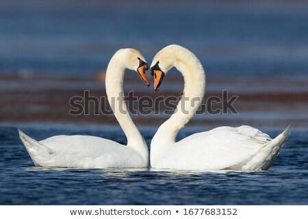 Due amore nice illustrazione isolato blu Foto d'archivio © X-etra