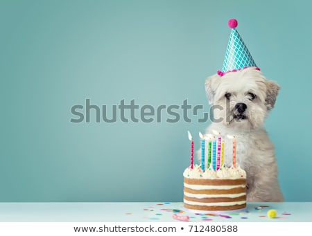 dogs birthday cake stock photo © alexeys