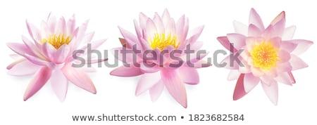 Három virágok izolált fehér közelkép stúdió Stock fotó © boroda