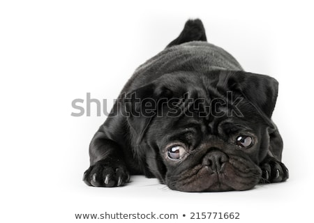 cute · triest · puppy · hond · geïsoleerd · witte - stockfoto © feedough