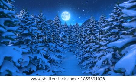Noël conte de fées grand décorations lumière Photo stock © tannjuska