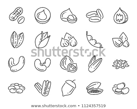 Vector icon nut Stock photo © zzve