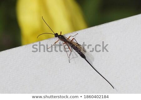 Stock photo: Walking Wasp