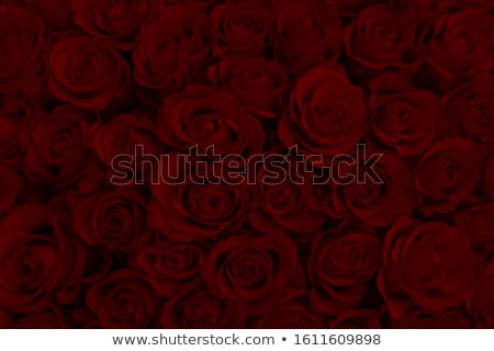 Fashionable cosmetics with a fresh red rose Stock photo © juniart