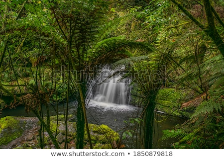 Green Rainforest Thick with Moss and Lush Plants Stock photo © Frankljr