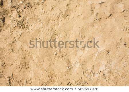 Minta kagylók víz homokos tengerpart Balti-tenger háttér Stock fotó © meinzahn