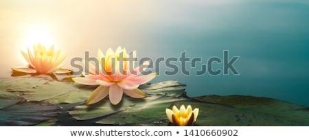 Bahçe sahne gölet çiçekler örnek manzara Stok fotoğraf © bluering