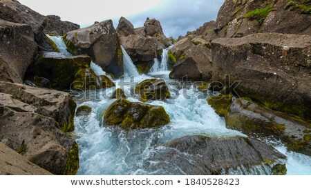 natural forest mountain stream rocks covered with green moss stock photo © konstanttin