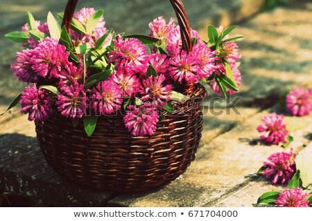 Yonca çiçekler sepet otlar hasat Stok fotoğraf © Virgin