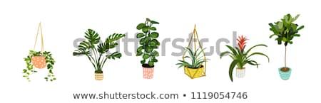 zöld · növény · edény · ikon · lineáris · stílus - stock fotó © studioworkstock