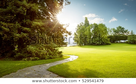 Green alley with trees in the park Stock photo © boggy
