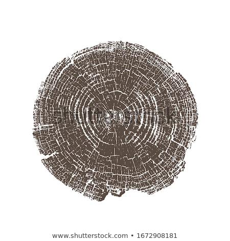 Tree trunk with cracks, vector illustration isolated on white background. Stock photo © kyryloff