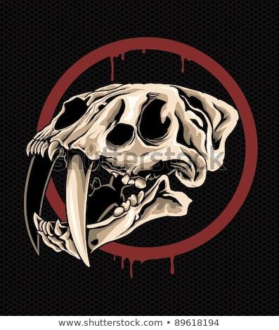 kaplan · kafatası · beyaz · kötü · korku · tehlike - stok fotoğraf © stocksnapper