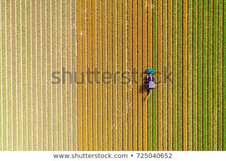 トラクター · チューリップ · フィールド · オランダ · 花 · 植物 - ストックフォト © hofmeester