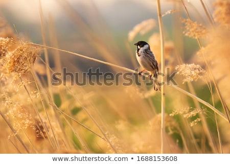 yeşil · bitkiler · mavi · gökyüzü · gökyüzü · arka · plan · yaz - stok fotoğraf © smithore