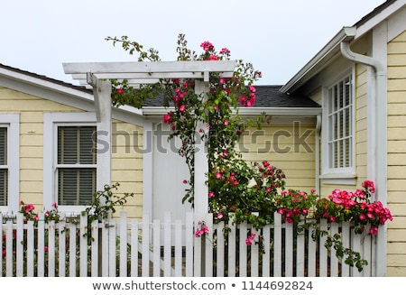 Wild flowers growing over white picket fence Stock photo © backyardproductions