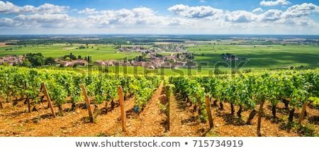 Agriculture landscape in French Bourgogne Stock photo © ivonnewierink