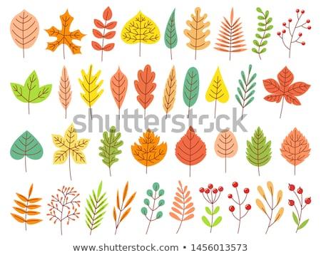 листьев снарядов землю осень трава лес Сток-фото © franky242