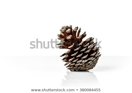 Single pinecone on white background Stock photo © haraldmuc