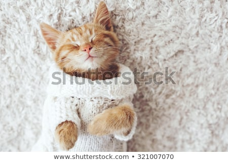 Cute knitting cat stock photo © juliakuz