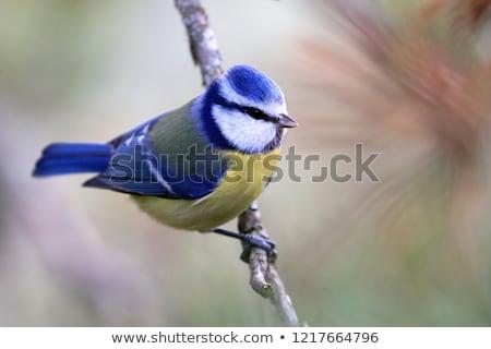 青 売り言葉 木の幹 木材 自然 美 ストックフォト © ivonnewierink