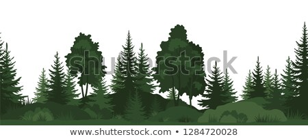 Birches on the background of pine forest Stock photo © azjoma