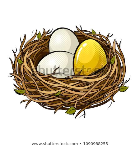 isoliert · Vogelnest · Eier · weiß · Bild · erschossen - stock foto © joannawnuk