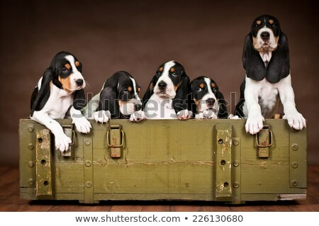 Black Swiss Hound  Stock photo © CaptureLight