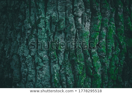 Szczegół zielone mech kopia przestrzeń lasu Zdjęcia stock © sarahdoow