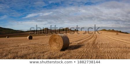 czech country with straw bales Stock photo © jonnysek