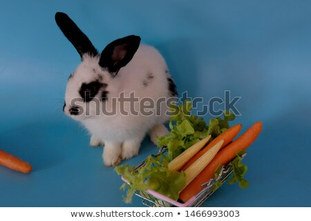 Red-eyed white rabbit eating carrot in a basket Stock photo © Photoline