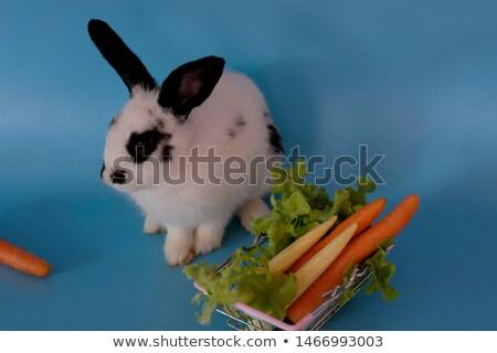 rabino · cenoura · pequeno · isolado · branco - foto stock © photoline