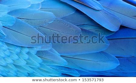 オウム 黄色 青 羽毛 実例 背景 ストックフォト © bluering