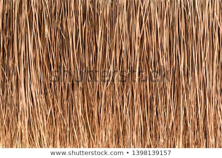 Reed grass background on a tropical beach Stock photo © luissantos84